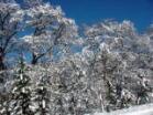 겨울의 삼림공원.적설 직후의 모습
