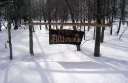 겨울의 쿠테쿤자유의 숲