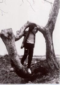 번뇌 느릅나무의 모델의 나무 1